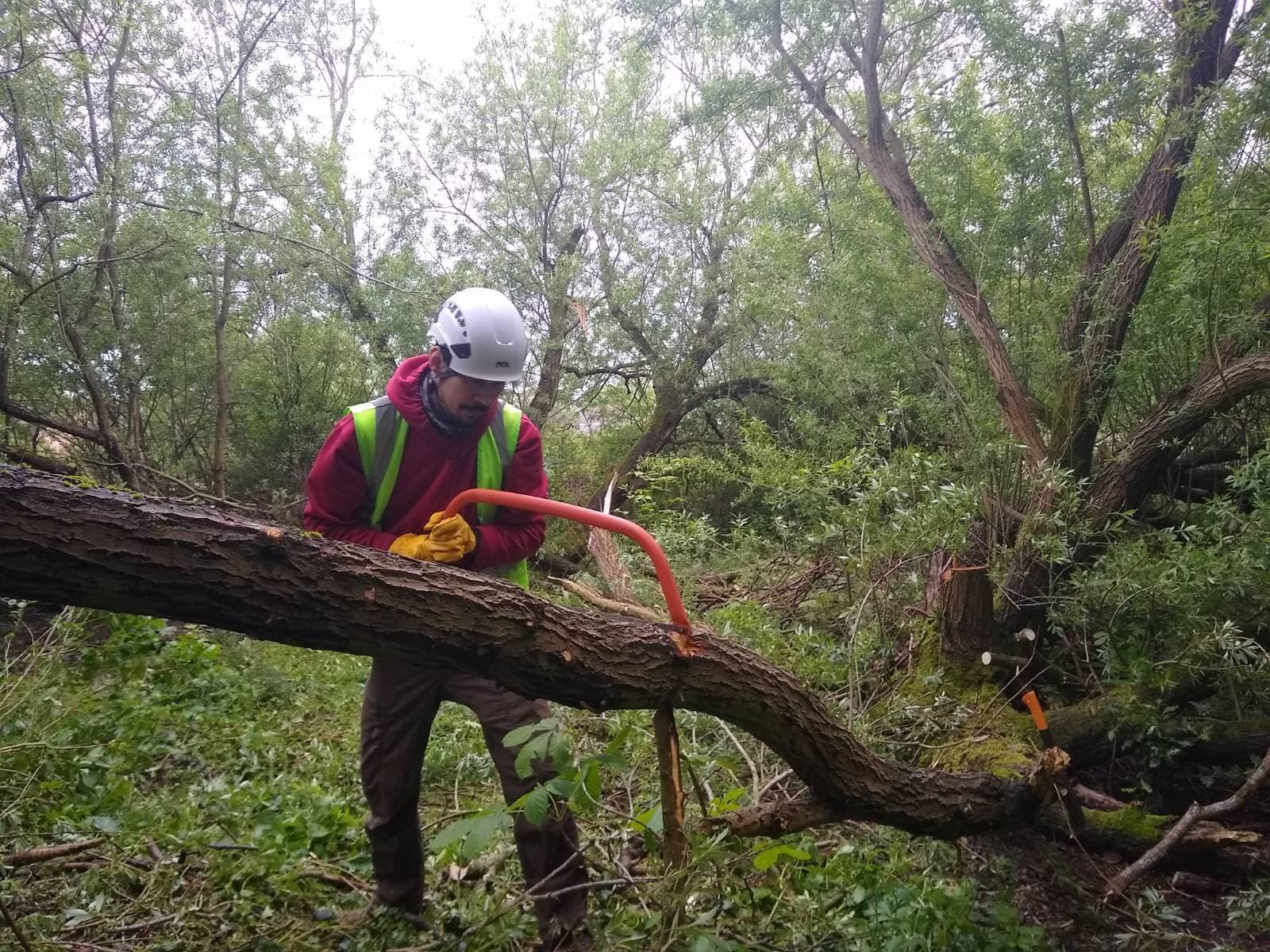 Volunteers continue restoration