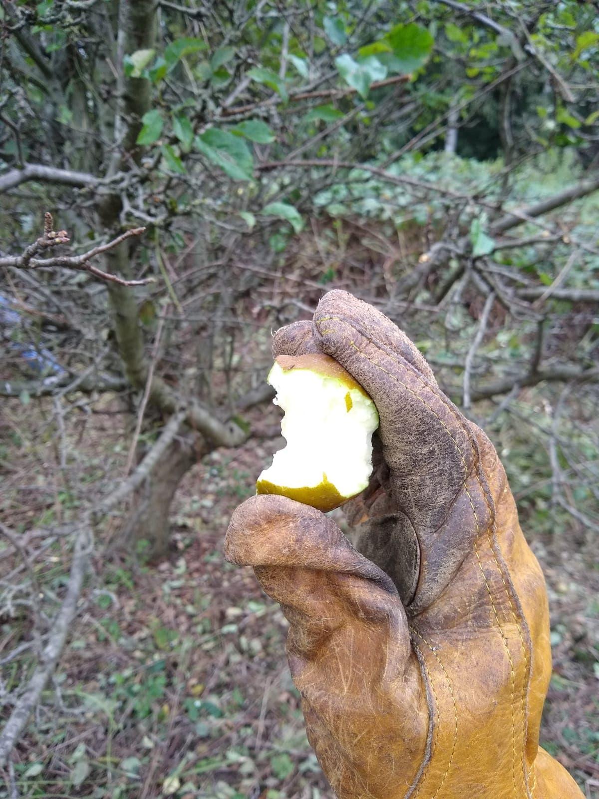 Conservation Work 10/09/20