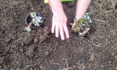 Plants, flowers and hibernaculum
